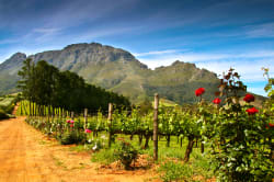 Vineyard, Franschhoek Valley