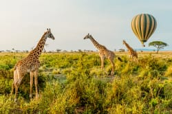 Hot Air Balloon Safari, Serengeti National Park