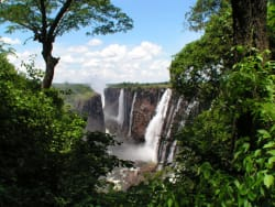 Victoria Falls rainforest