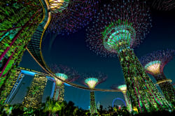 Supertrees, Gardens by the Bay Photo by Edward Tian