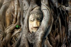 Buddha head, Wat Mahathat