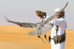 Falconry demonstration