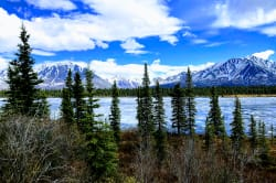 Chase Trail, Talkeetna Photo by L J Ribar on Unsplash