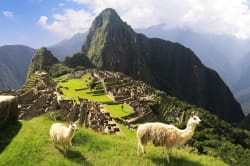 Alpacas, Machu Picchu
