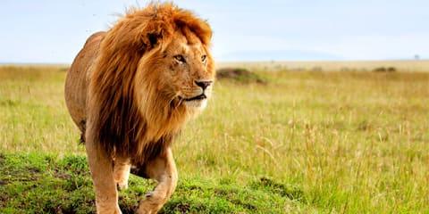 Dazzling Dubai & Kenya Safari