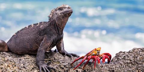 Peru, Ecuador & Galapagos Cruise