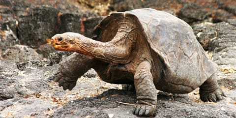 Galapagos Islands Adventure