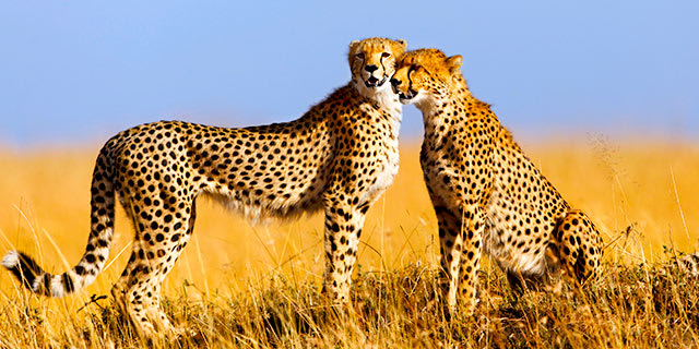 Best of Kenya & Tanzania Safari