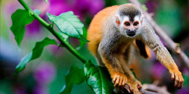 Captivating Costa Rica
