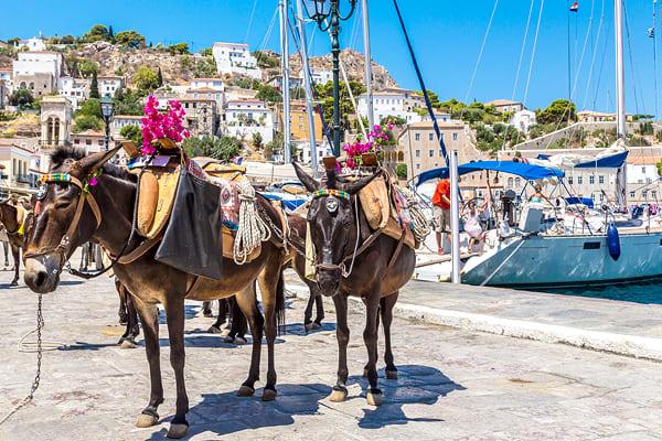 Donkeys, Hydra Island