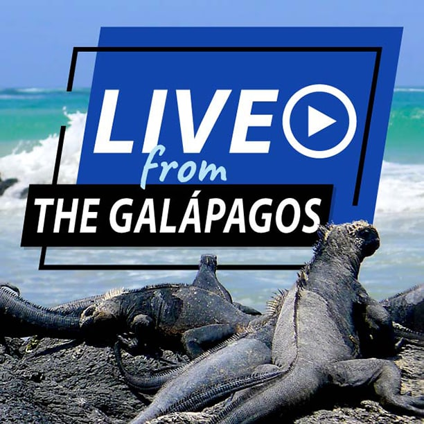 Live From Galapagos