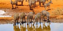 Kenya perfected the safari