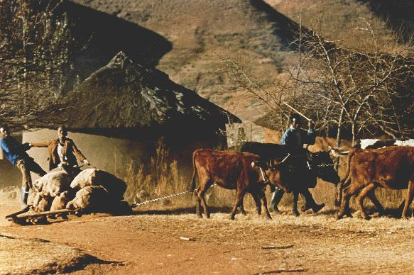 Lesotho Coal Hauling
