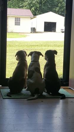 Pretzel, Sadie and Molly standing at the door
