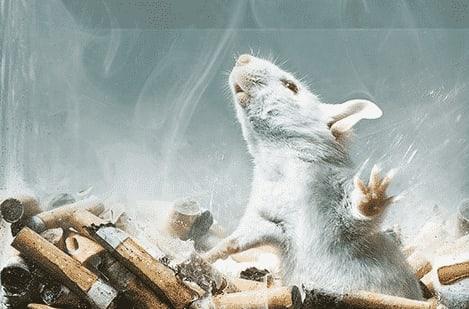 Topolino commissione europea sigaretta elettronica