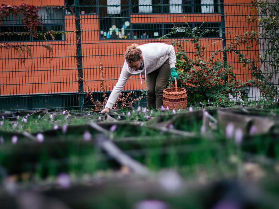 Team Building Récolte et Emondage de safran à Montrouge (92)
