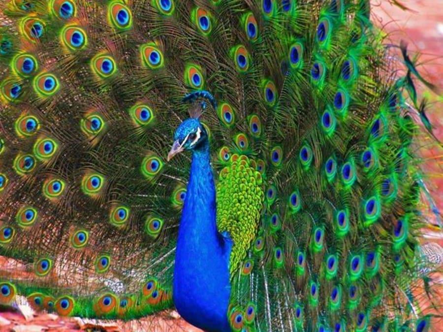 Anniversaire au Zoo Parc du Cannet des Maures 4-11 ans