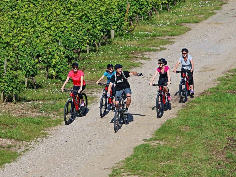Balade VTT guidée dans les vignes d'Anjou