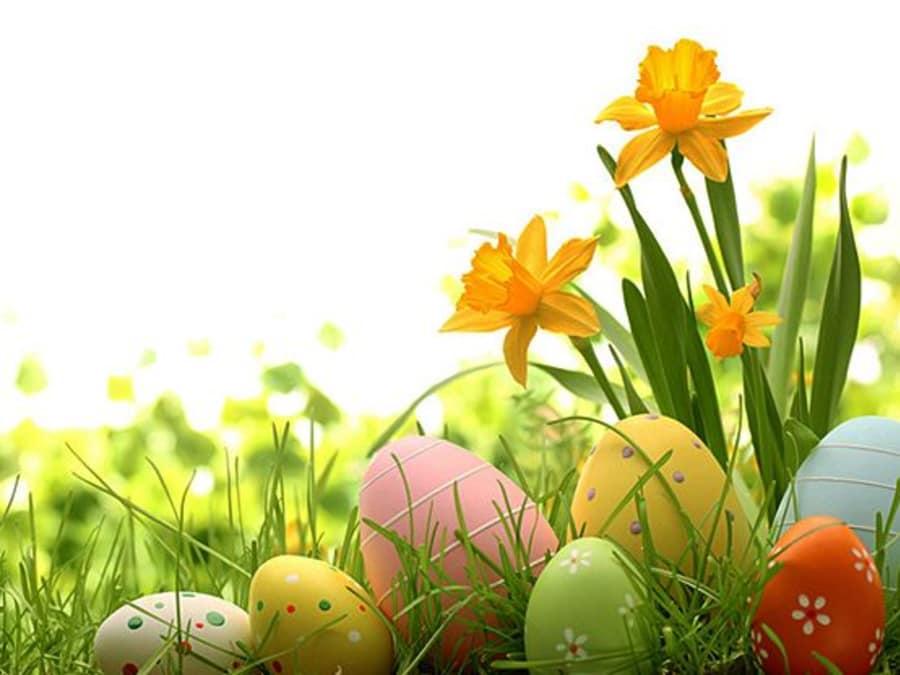 Chasse aux œufs de Pâques à la Ferme de Rutel (77) !