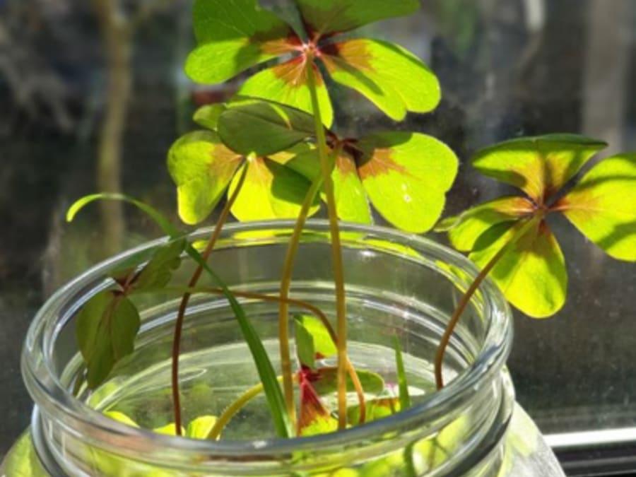 Atelier végétal je crée mon terrarium porte-bonheur à Herblay