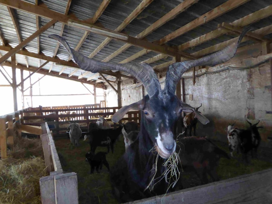 Visite de la ferme pédagogique de Monsieur Seguin dans l'Ain