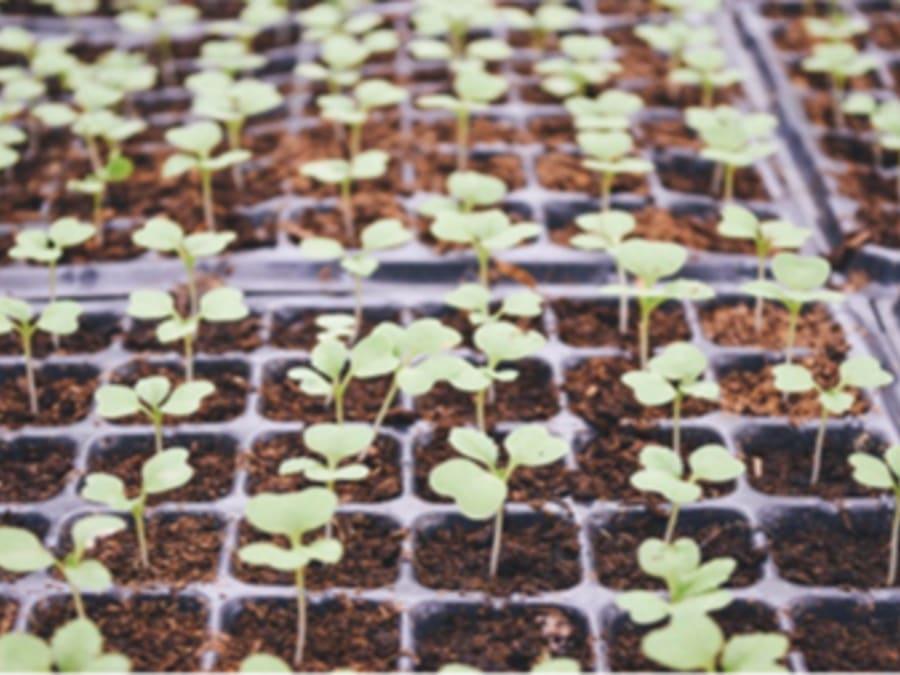Atelier végétal les premiers semis de l'année Truffaut Herblay