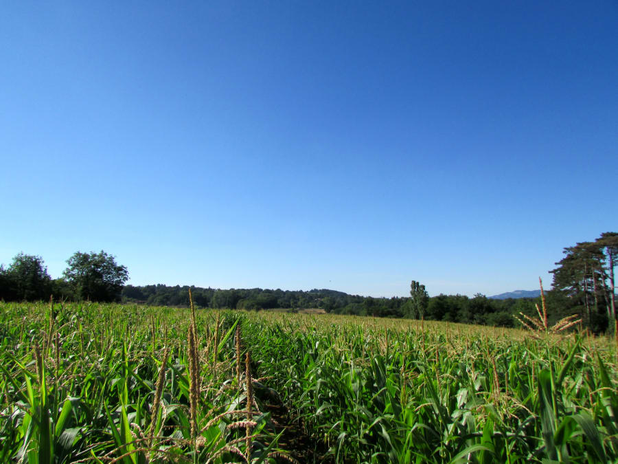 Jeu écologique dans un labyrinthe de Maïs proche de Lyon (69)