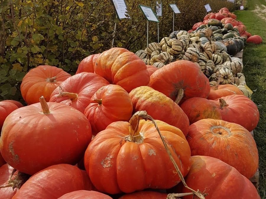 Atelier décoration citrouille Halloween à la ferme d'Octeville