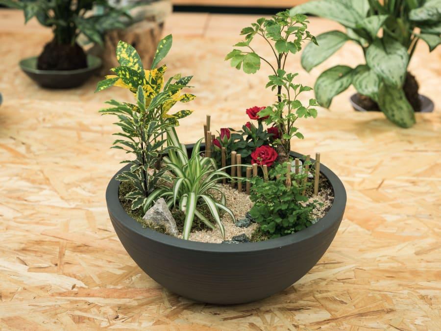 Atelier DIY Création de mini jardin zen chez Truffaut Plaisir