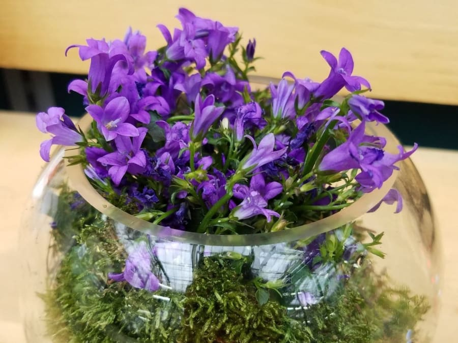 Atelier mon mini terrarium fleuri, chez Truffaut Ville-du-Bois