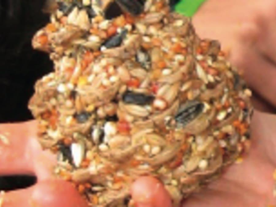 Atelier création boule de graisse pour oiseaux Truffaut Plaisir