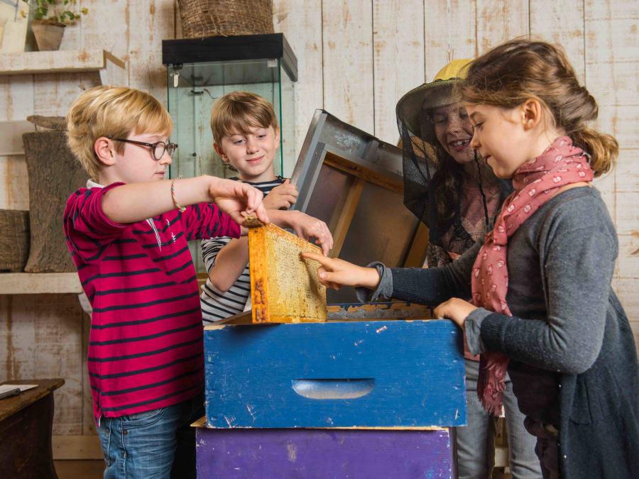Atelier Abeilles & animaux - Ferme de Gally (St-Cyr-l'Ecole)