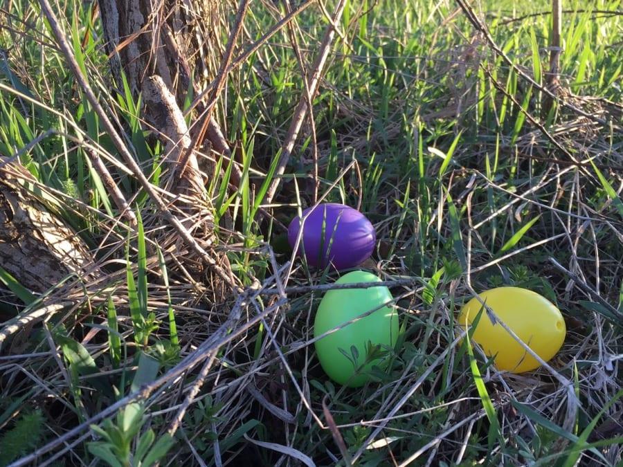 Chasse aux œufs de Pâques à la ferme cueillette de Paradisvogel