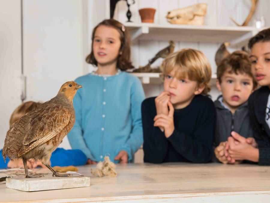 Atelier Oiseaux & animaux  Ferme de Gally (St-Cyr-l'Ecole)