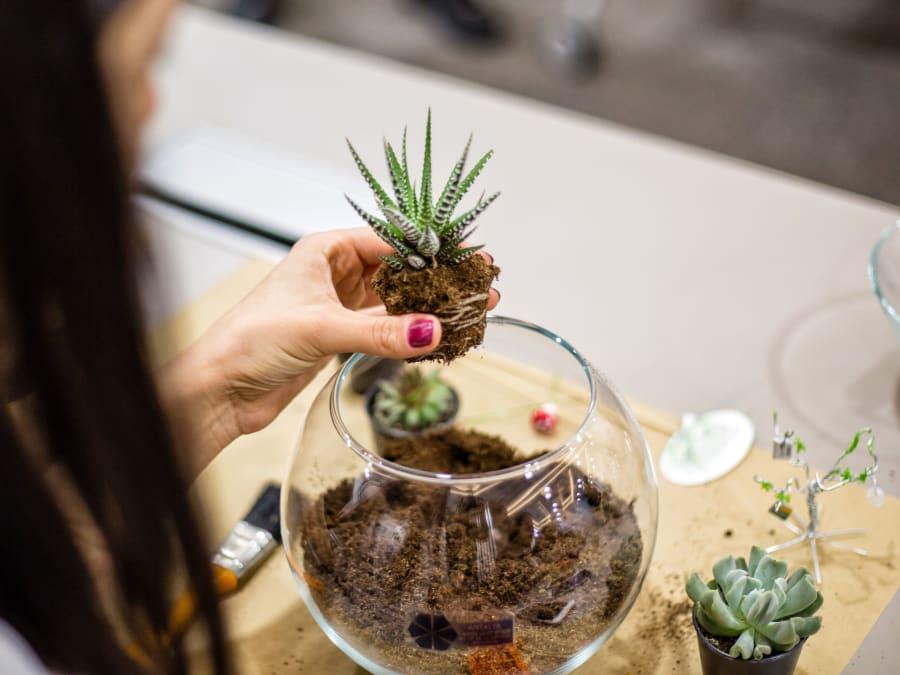 Team Building Atelier Floral Création d'un Terrarium