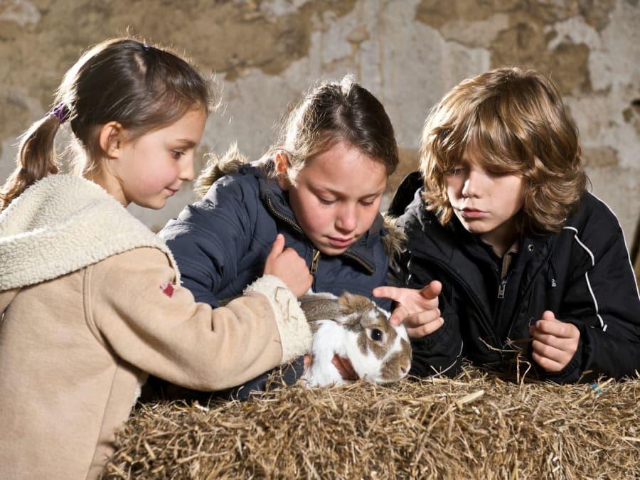 Anniversaire 6-12 ans à la Ferme de Gally de Saint-Denis