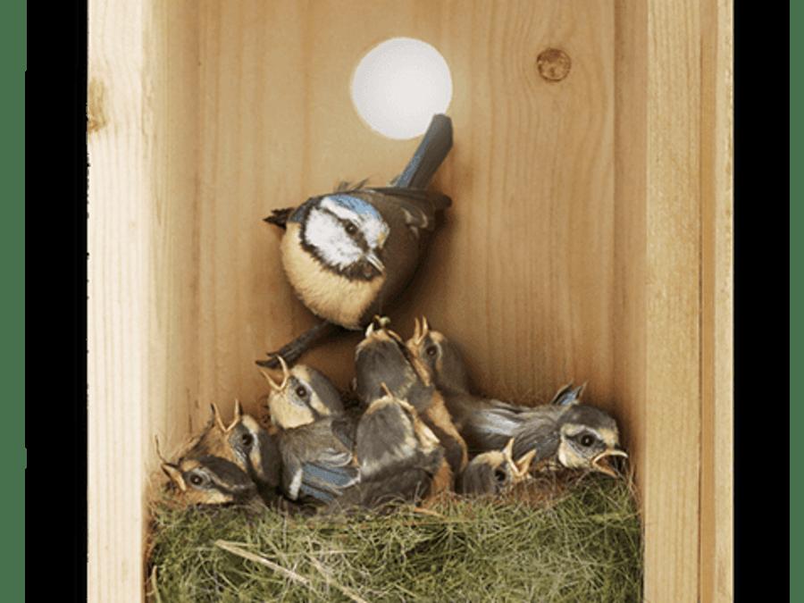 Animation oiseaux! Nids et distributeurs de laine!