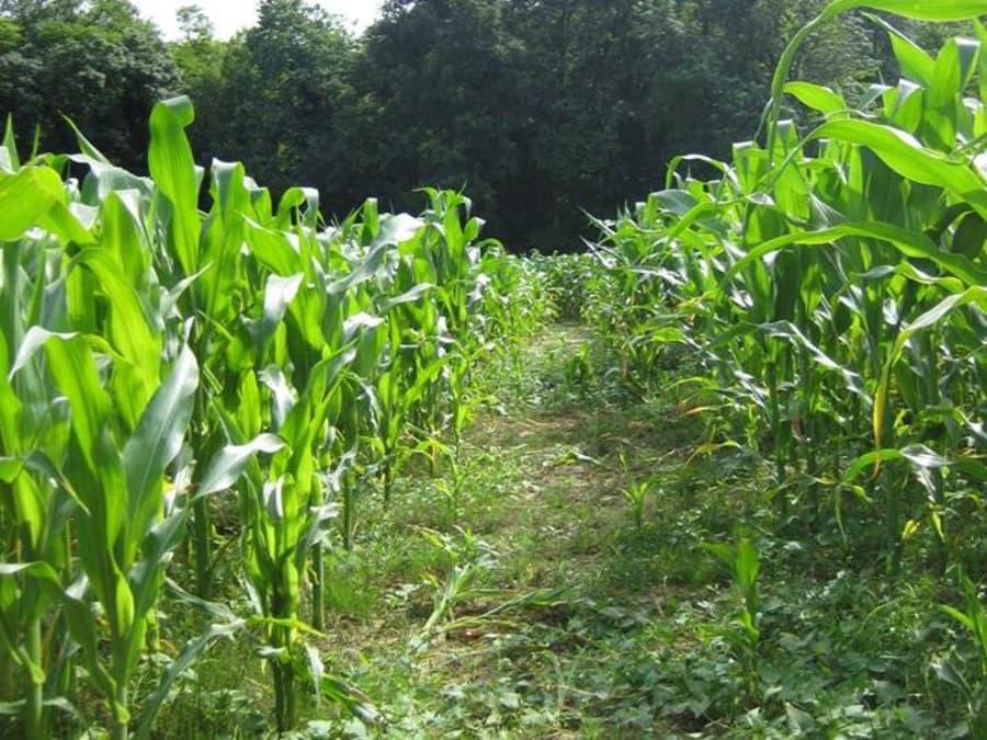 Visite du labyrinthe végétal