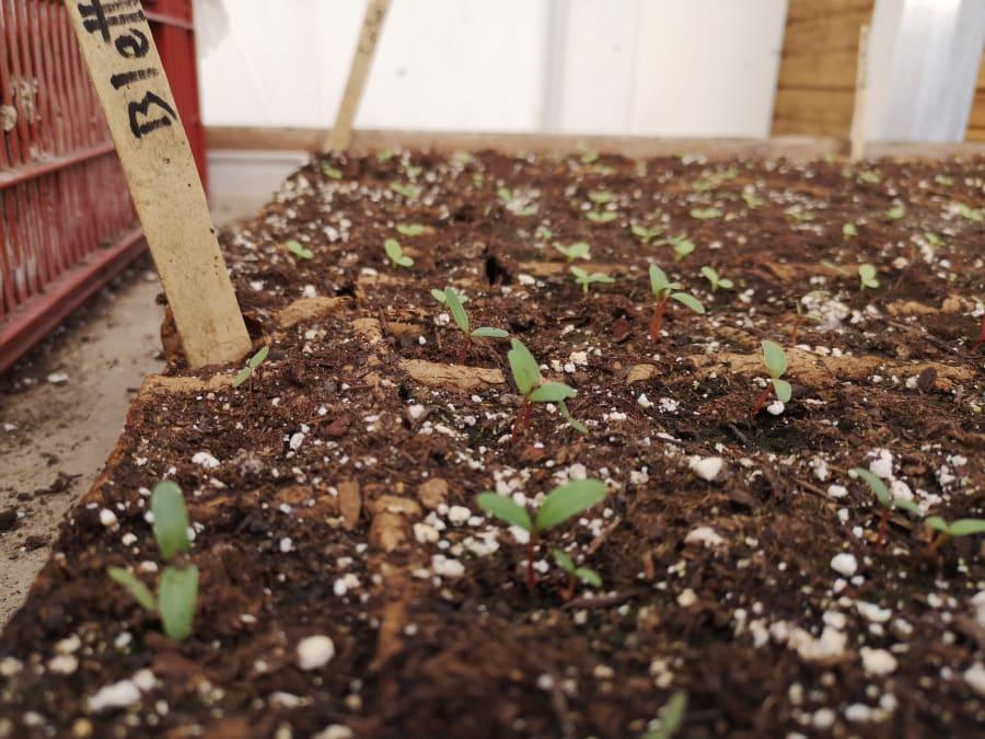 Atelier plantation et semis à la Ferme Ouverte de Saint-Denis
