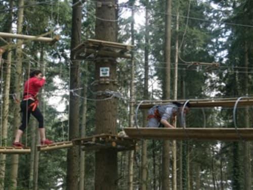 Acroforest