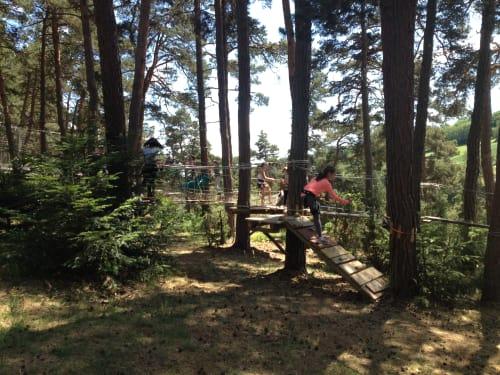 Canopy en Forêt