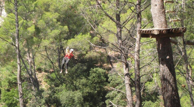 Le Royaume des Arbres - Le Castellet