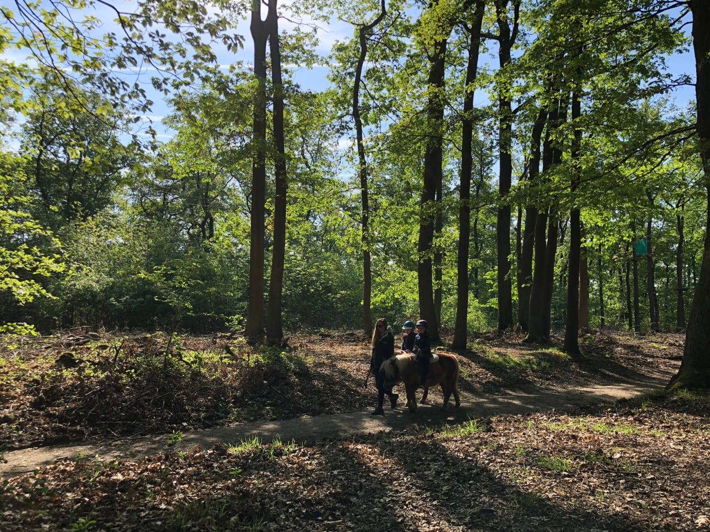 Ecopark Adventures à Bièvres (91) - Bièvres