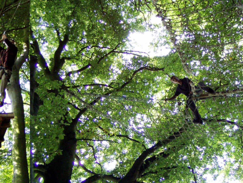 La forêt des Elfes - Cérences