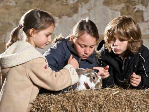 Visites des animaux de la Ferme de Gally (St-Cyr-l'Ecole)