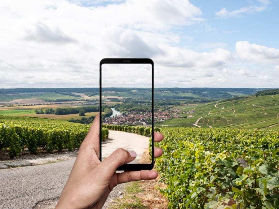 Smartphone qui prend en photo des vignes