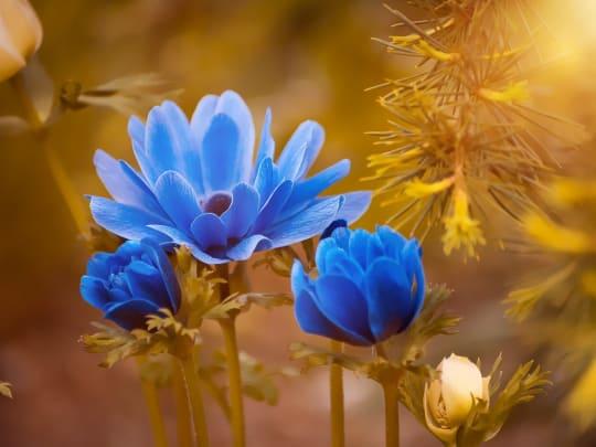 flowers for inspiring funeral readings