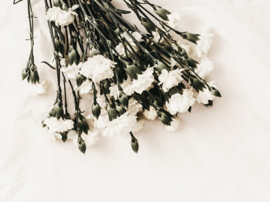 White flowers on a white background representing the services of funeral comparison website Funeralocity