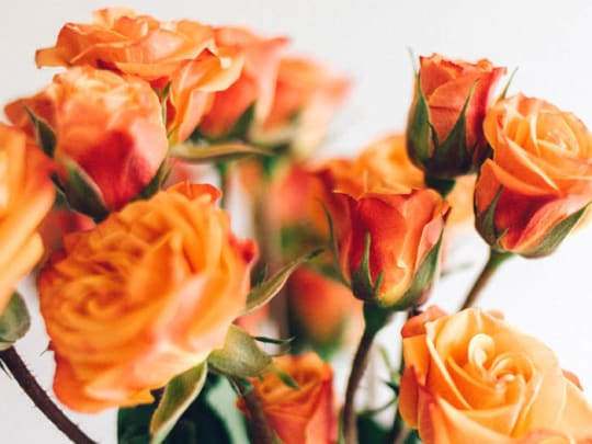 Celebration of Life Service - Funeralocity