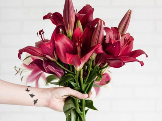 Person holding maroon stargazer flowers
